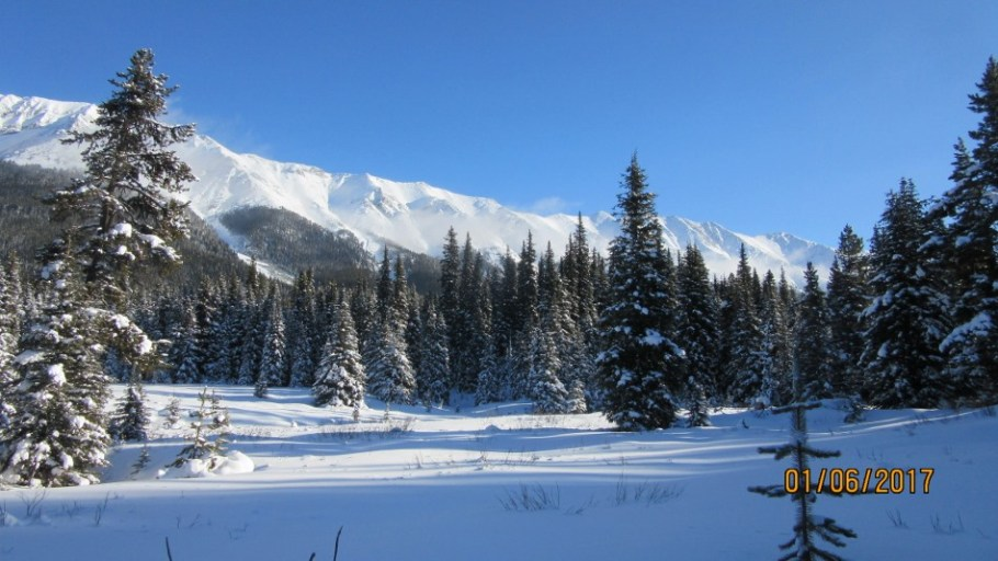 Meadow Tyrwhitt Trail
