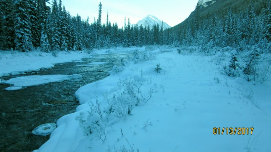 View up the Spray River
