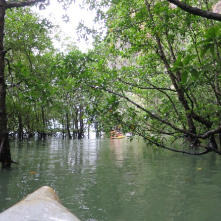 Stop 3: Canoeing through the mangroves.