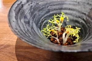 Dialogue LA - Grapefruit, Chicory, Cocoa Cardona Wisconsin goat cheese, black walnut