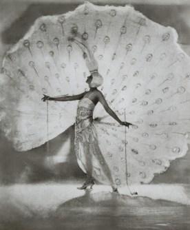 White-Peacock-3