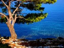 Un árbol en la bahía. Telascica. Dugi Otok. Dalmatia. Croatia. WU PHOTO © Willy Uribe Archivo Fotográfico Reportajes