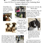 The Spring Collection adoption event