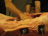 stuffing the carcass
