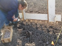 planting cloves in holes; our garlic hole drill