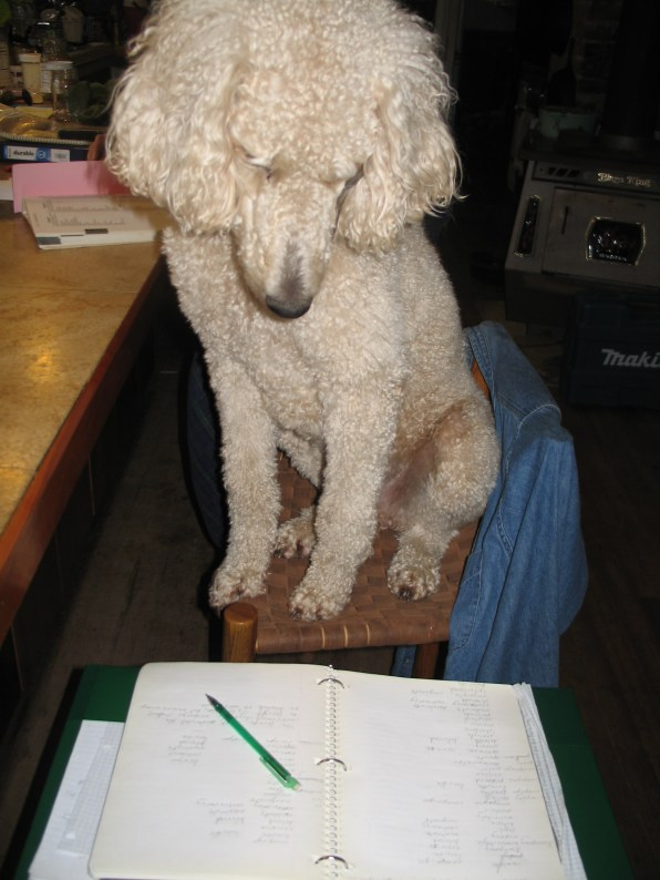 Murrey studying his spelling words. Poodles are pretty smart, you know! (OK, RANDOM, but so cute!)