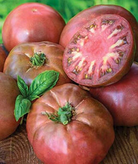 Heirloom Tomato Black Krim