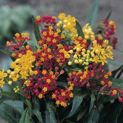 Butterfly garden nursery item from Wimbee Creek Farm