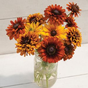 Rudbeckia 'cherokee sunset'blooms all summer long from the gardens at Wimbee Creek Farm.