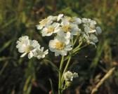 bloemen-wilde-bertram