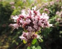 bloemen-wilde-marjoleinmarjolein-5