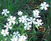 bloemen grootbloemigmuur