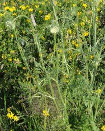 fragment plant