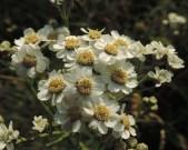 wilde-bertram-bloemen