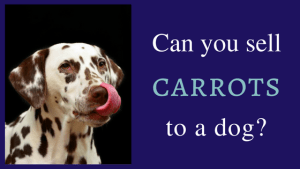 Can you sell carrots to a dog?