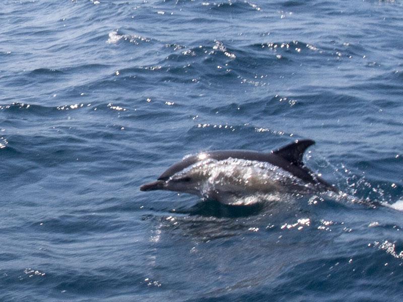 Delphinschule: den richtigen Moment getroffen
