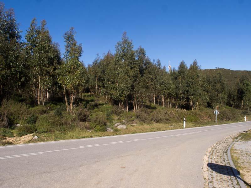 Eukalyptus Bäume versprühen am Fora einen wunderbaren Geruch