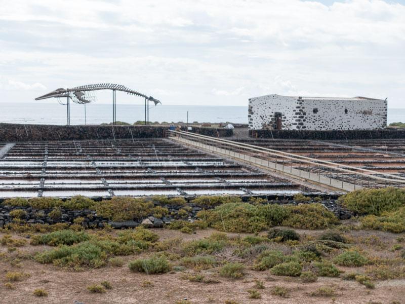Inselrundfahrt Fuerteventura: Grindwalskelett in den Salinen