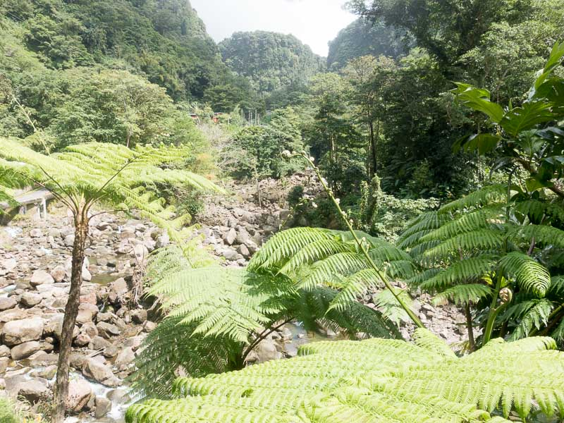 Regenwald auf Dominica: Blick auf die Trafalgar Falls