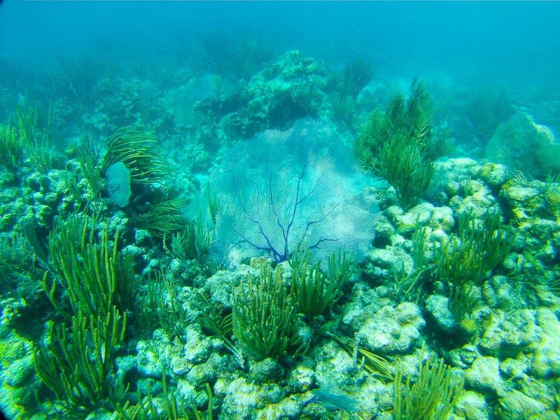 Culebrita Schnorcheln: Unterwasserlandschaft