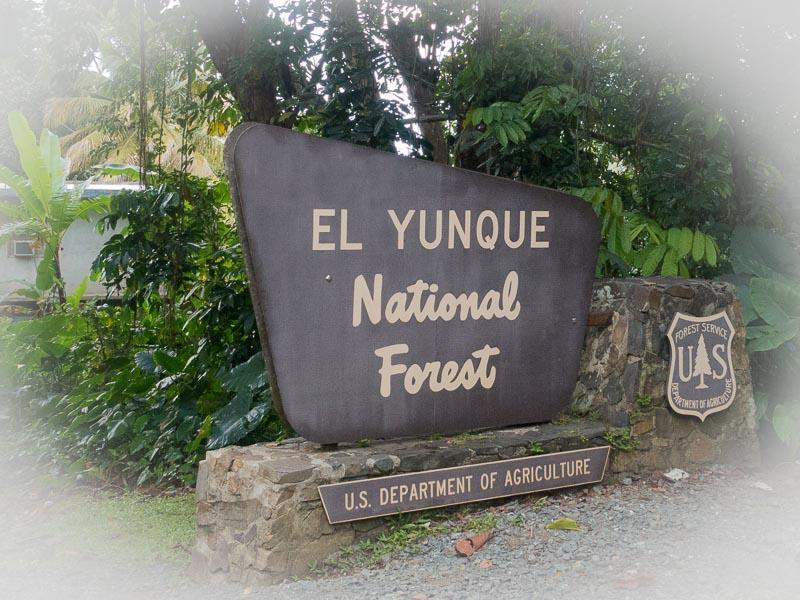 El Yiunque: der Eingang in den Park
