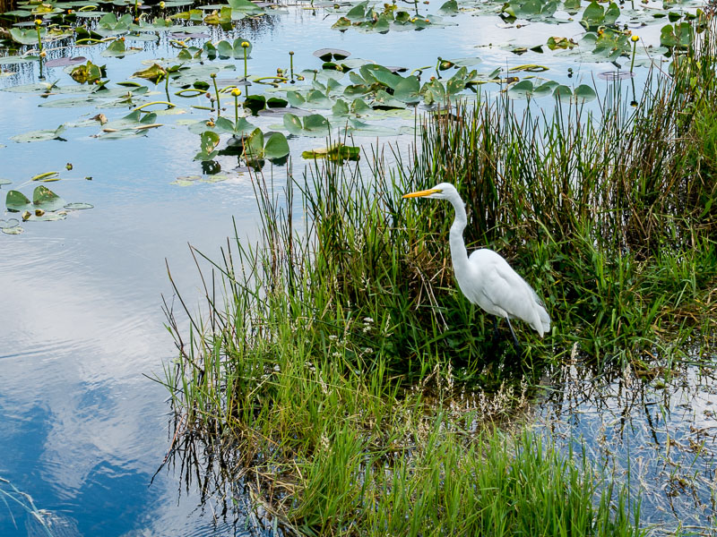 Everglades: Anhinga Trail