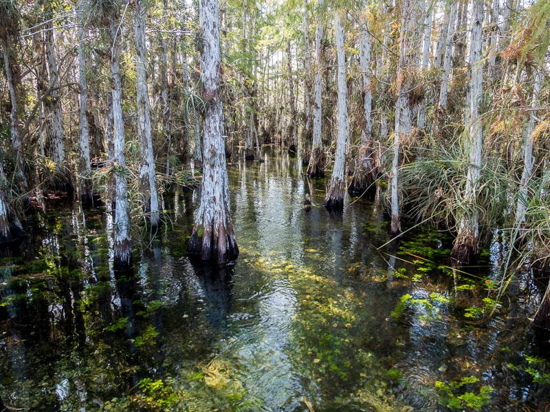 Everglades: Wasser wo immer man auch ist