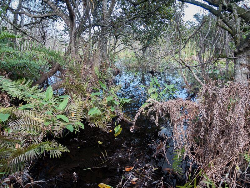Everglades_2-24.jpg