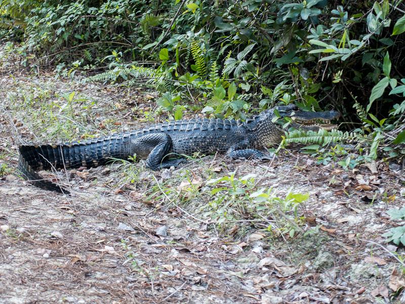 Everglades_2-28.jpg