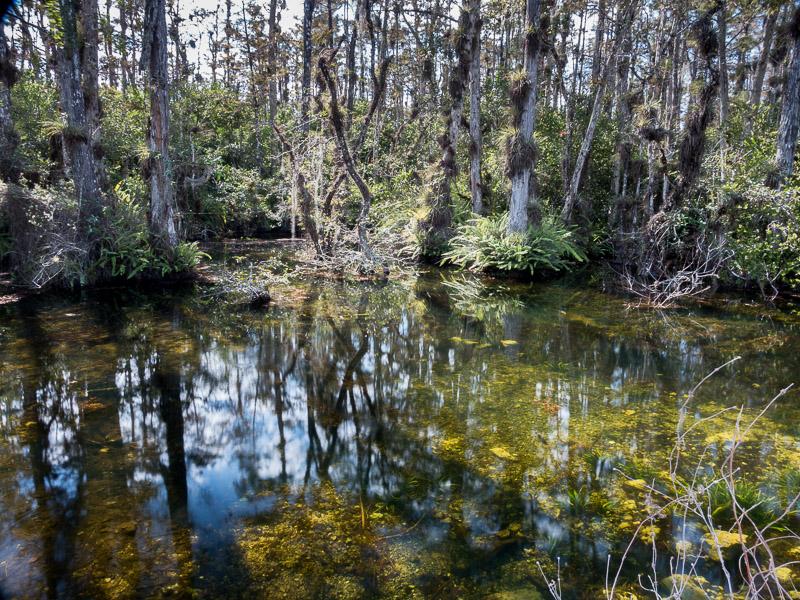 Everglades_2-38.jpg
