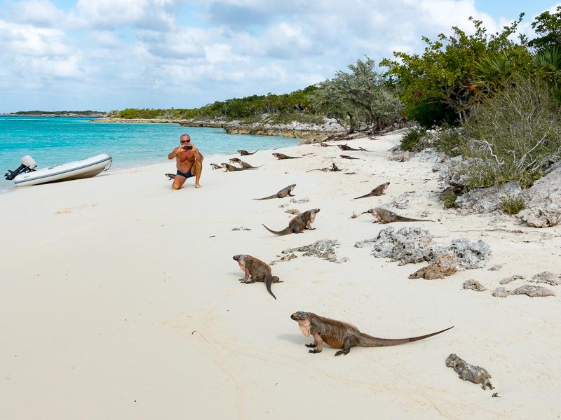 Mitsegeln Bahamas: die Iguanas