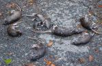 October: Even rats drowned during Hurricane Sandy