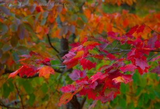 Mohonk Fall colors 13