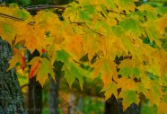 Mohonk Fall colors 16