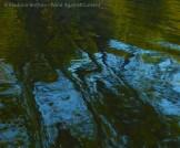 Fall Water 10