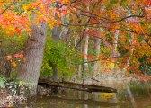 Fall colors 7