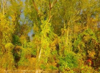 ... gilds the wild overgrowth