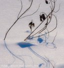 Snow shadows 4