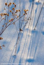 Snow shadows 3