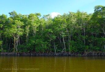Impressive mangrove walls line the banks