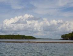Typical Ten Thousand Islands scene