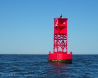 Red buoy, with cormorant