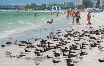 St. Pete Beach birds 5