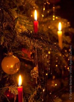 Christmas 2014 11