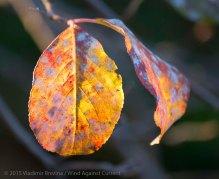 Fall Colors 2015 11
