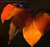Fall Colors 2015 18