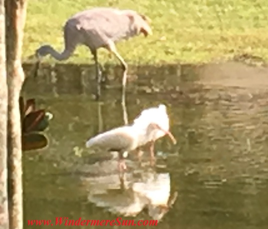 Crane and baby cranes1 mother and baby final