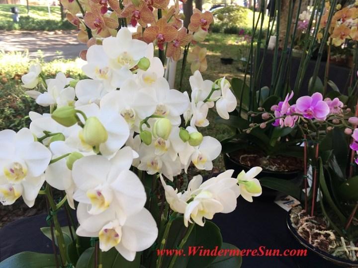 orchids-closeup-final