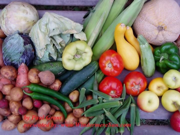 August vegetables (credit: Paul Grant)