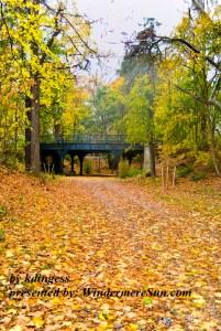 Fall Walk (credit: kdingess)